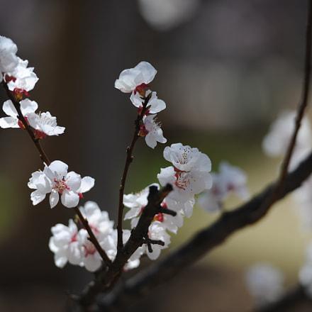 spring, Nikon D3X, AF-S Nikkor 70-200mm f/2.8G ED VR II
