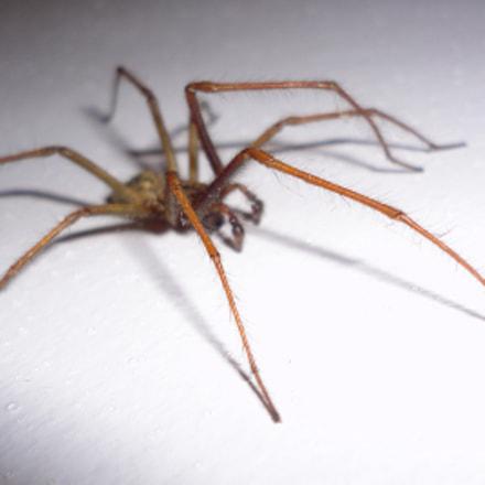 Spider1, Sony DSC-W350