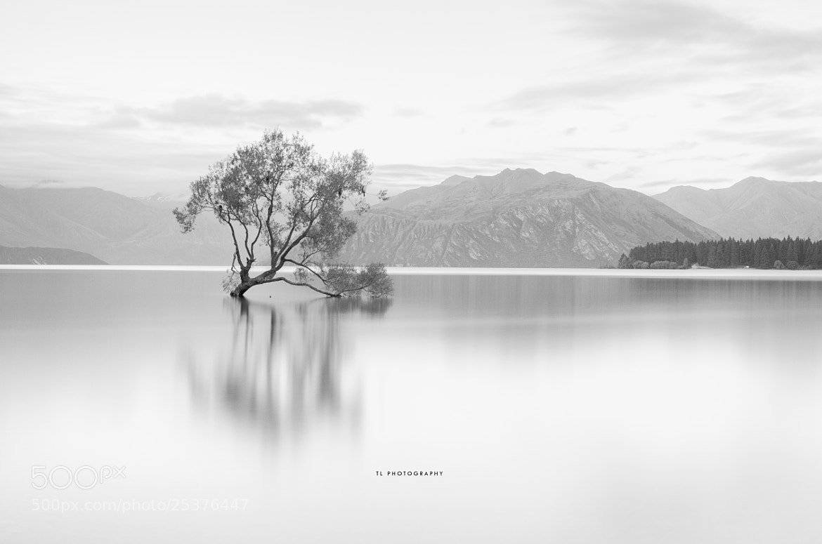 Photograph Soloist by Tony Lim on 500px