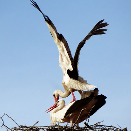 storks family, Canon POWERSHOT SX270 HS