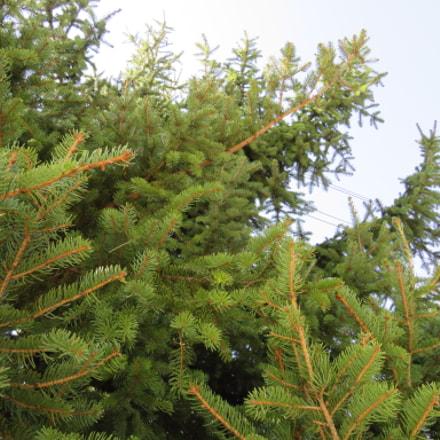 Tree, Canon POWERSHOT SX540 HS