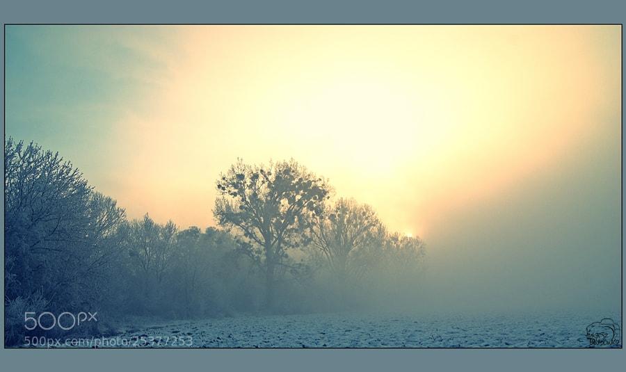 Photograph -20C outside by Lukasz Dawidowicz on 500px