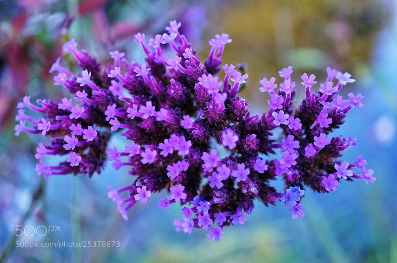 Photograph Little Purple by Nina  Lin on 500px