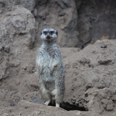 animals in loroparque, teneriffa, Canon EOS 650D, Canon EF 70-200mm f/4L IS