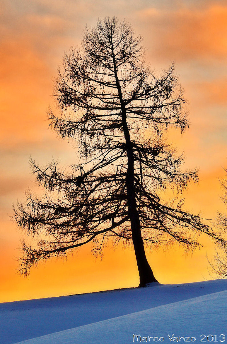 Photograph Tree by Marco Vanzo on 500px