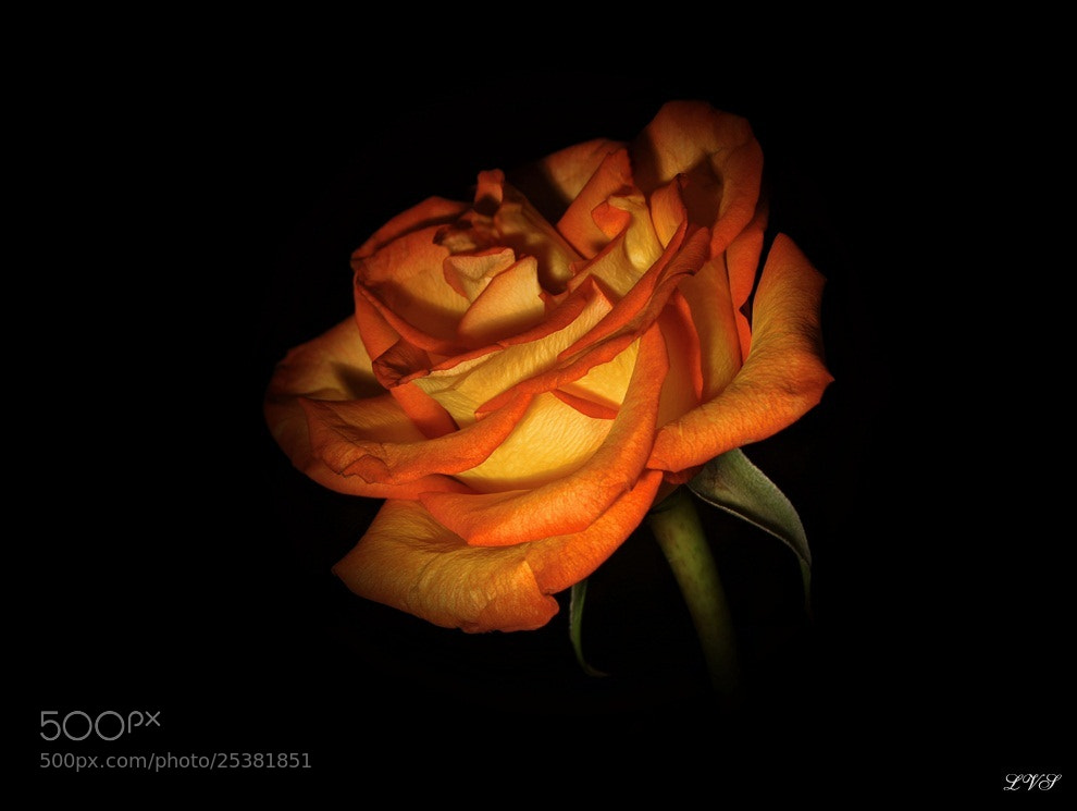 Photograph glowing beauty by Lillian Vazquez (Sanllehi) on 500px