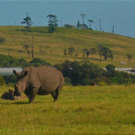 Solo Rhino, Canon POWERSHOT A540