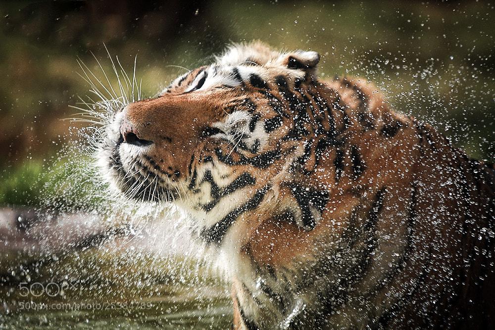 Photograph After shower  by Mohamed Al Jaberi on 500px