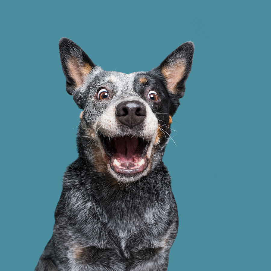 Dogsonality - adopted Phoebe by Elke Vogelsang on 500px.com
