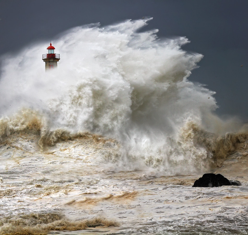 Photograph Enduring the elements by Veselin Malinov on 500px