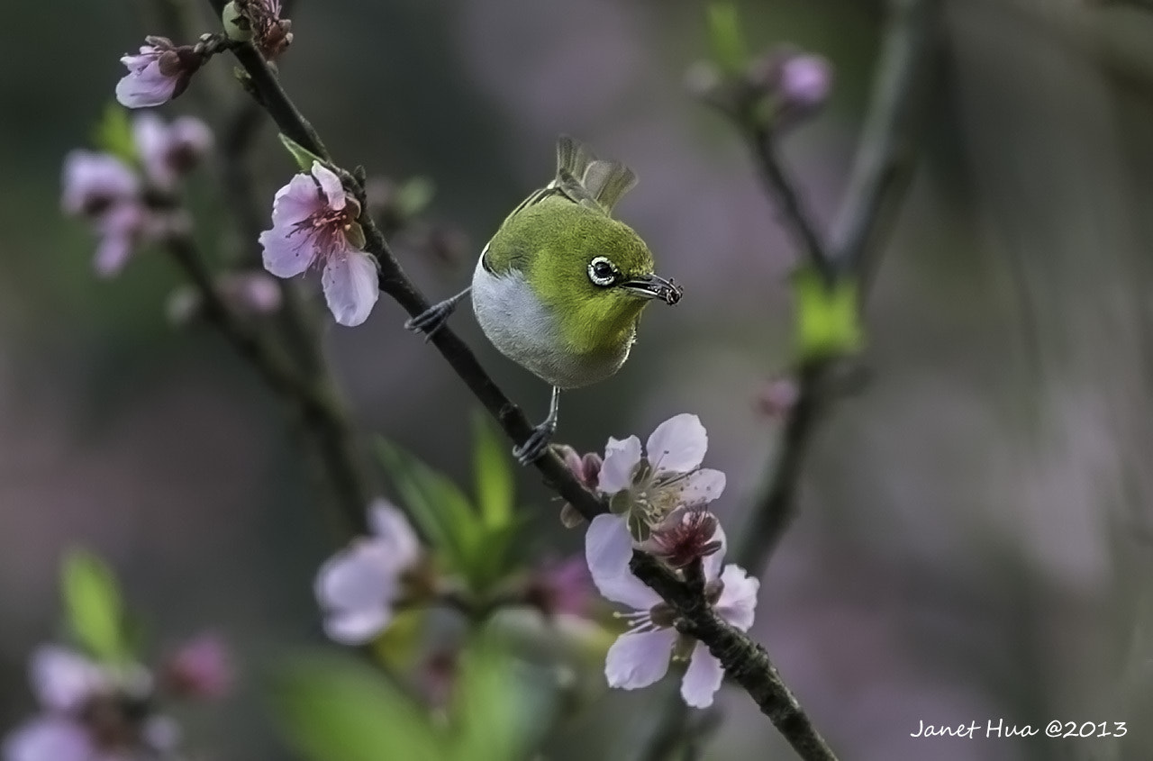 Photograph Here comes the Spring by Janet Hua on 500px