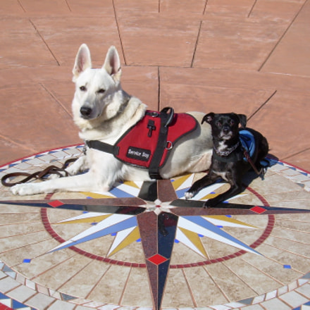 Service Dogs Kai & Scamp, Nikon COOLPIX L4