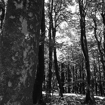 Untitled, Nikon COOLPIX S2700