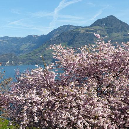 Vierwaldst ttersee - Switzerland, Panasonic DMC-FZ62