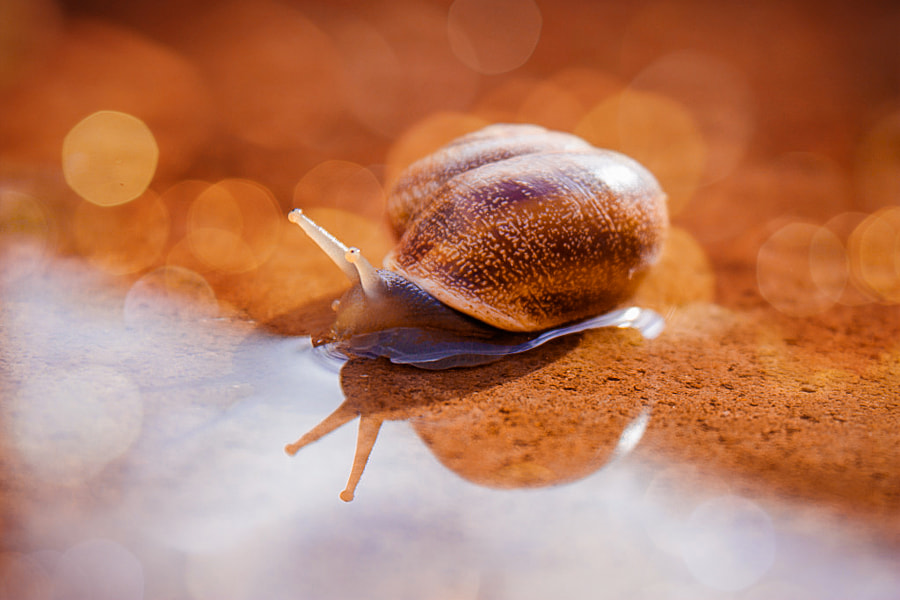 snail by Linda photography on 500px.com