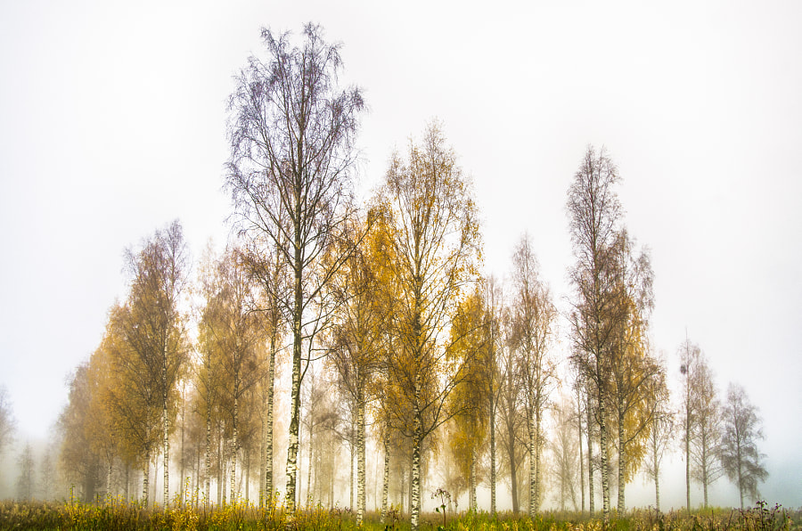 Foggy day by Markus Kauppinen on 500px.com