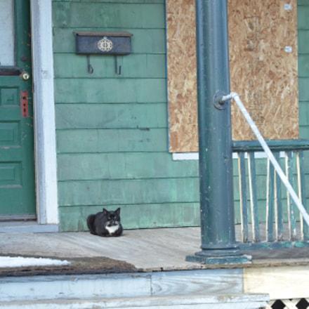 Lone Cat, Nikon D7000, AF Zoom-Nikkor 24-85mm f/2.8-4D IF