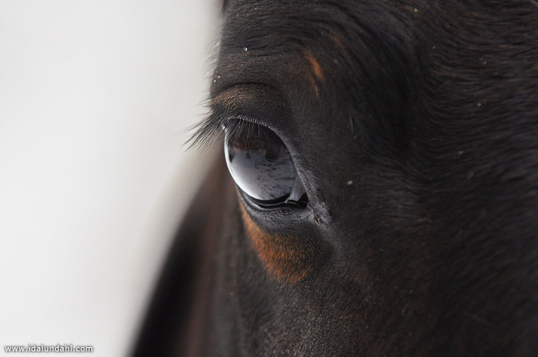 Photograph The horse view by Ida Lundahl on 500px