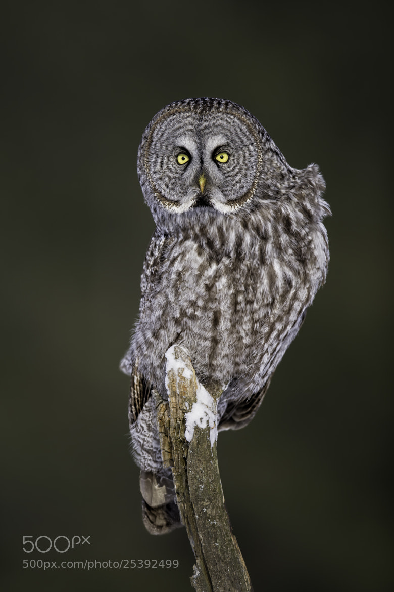 Photograph THE Look! by Daniel Parent on 500px