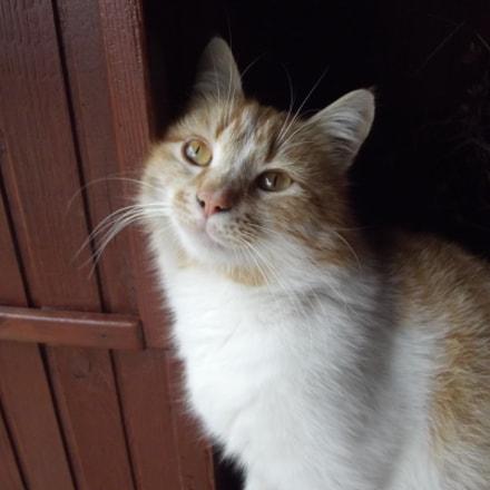 Kitty, Fujifilm FinePix S2950