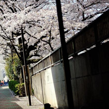 spring for tokyoites, Nikon D700, AF Nikkor 85mm f/1.8D