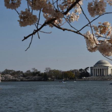 Thomas Jefferson Memorial framed, Nikon D810, AF-S Nikkor 24-120mm f/4G ED VR