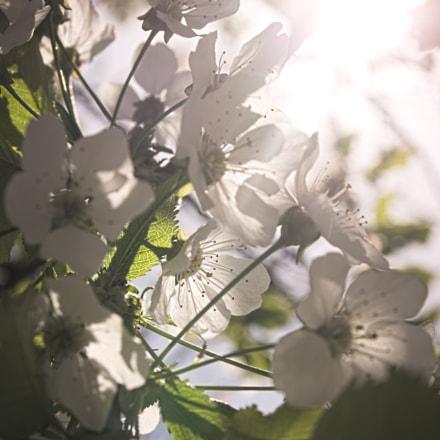 Light of life, Canon EOS 1100D, Sigma 17-70mm f/2.8-4.5 DC Macro