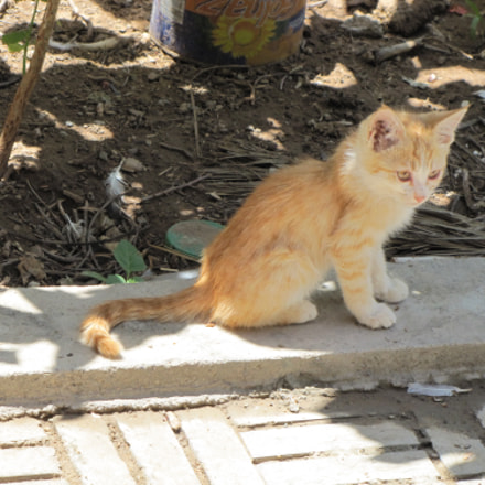 Young Cat, Canon POWERSHOT SX20 IS