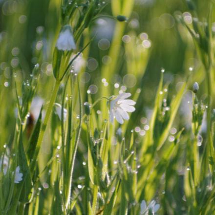 Spring, Canon EOS 1100D