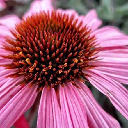 DNI flower 07, Canon IXUS 230 HS