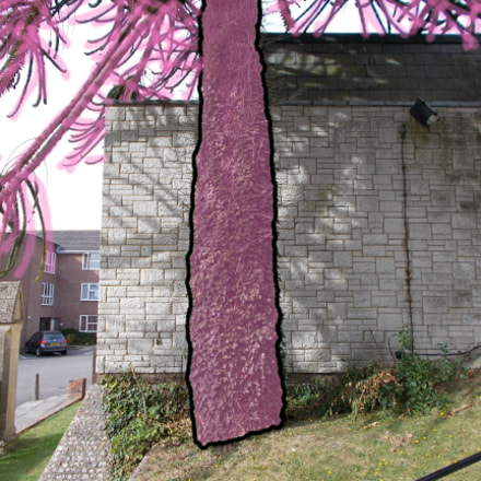 Pink Tree Study, Nikon COOLPIX A10