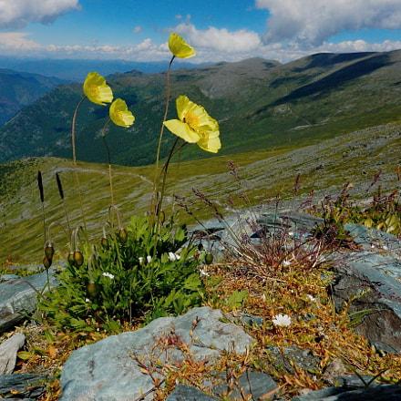 Russia. mountain Altai. Yellow, Nikon COOLPIX AW120