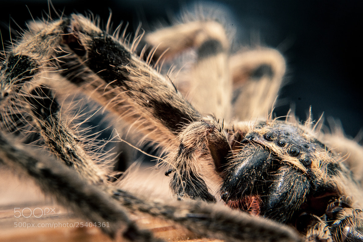 Photograph I am a Spider! by Mariano Gila on 500px