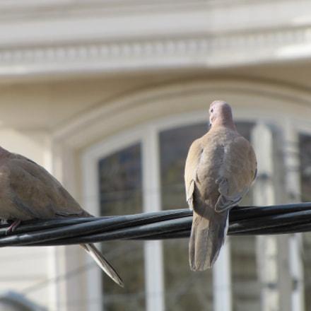 Birds in love, Canon POWERSHOT SX20 IS