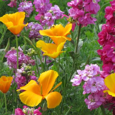 Flower garden, Canon POWERSHOT SX20 IS