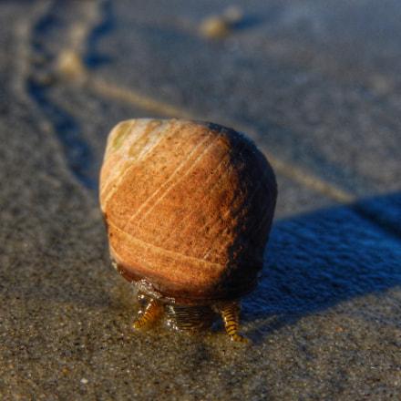 Snail on a Beach, Nikon COOLPIX S9600