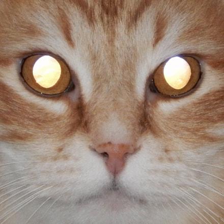 Hypnotic Cat, Nikon COOLPIX S9600