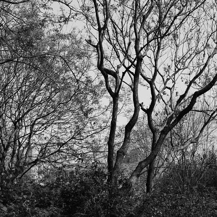 树的线条, Nikon COOLPIX P900s