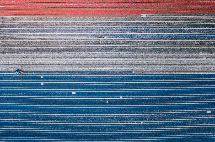 Dutch Tulip Field by Niels Keekstra on 500px.com