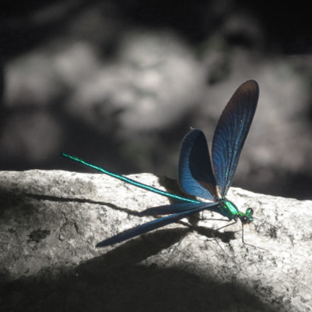 Dragonfly, Canon POWERSHOT A700
