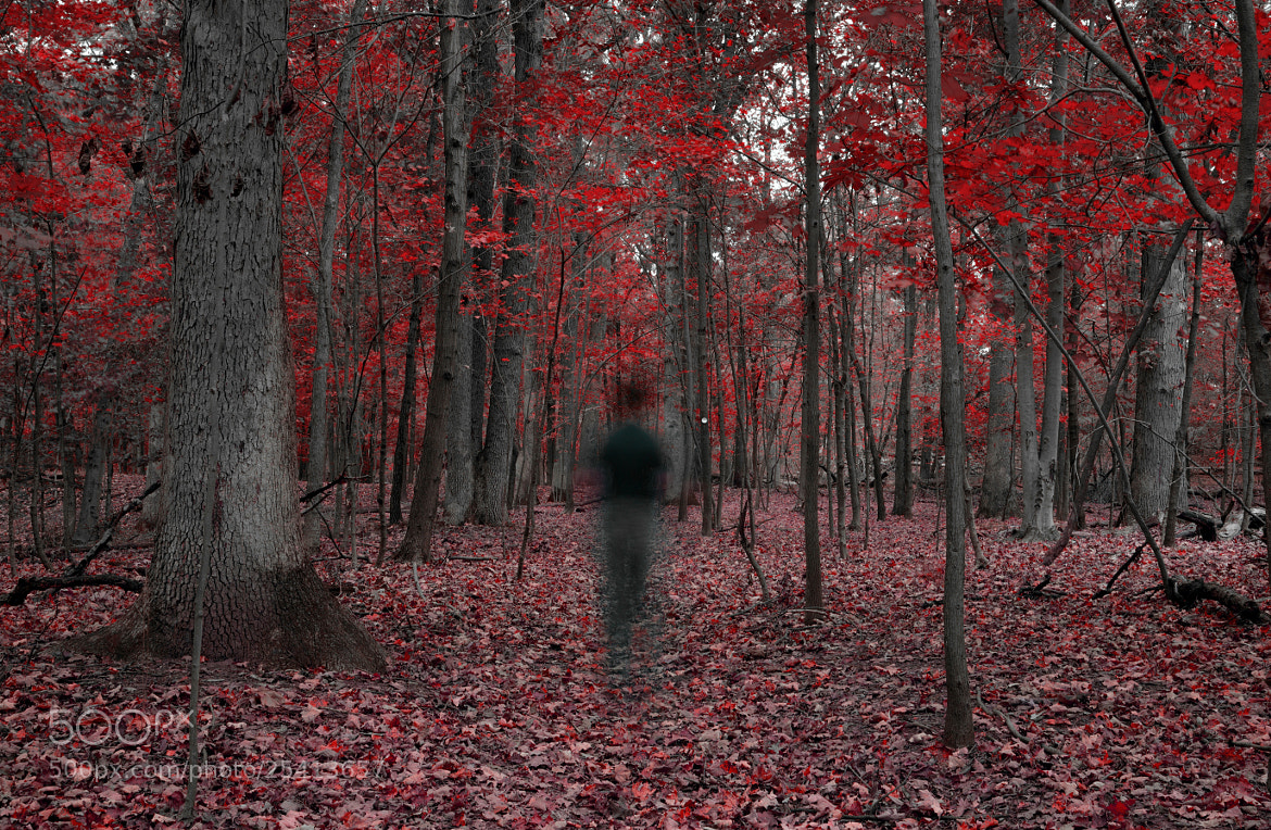 Photograph The Ghost of the Forrest by Angel Escalante on 500px