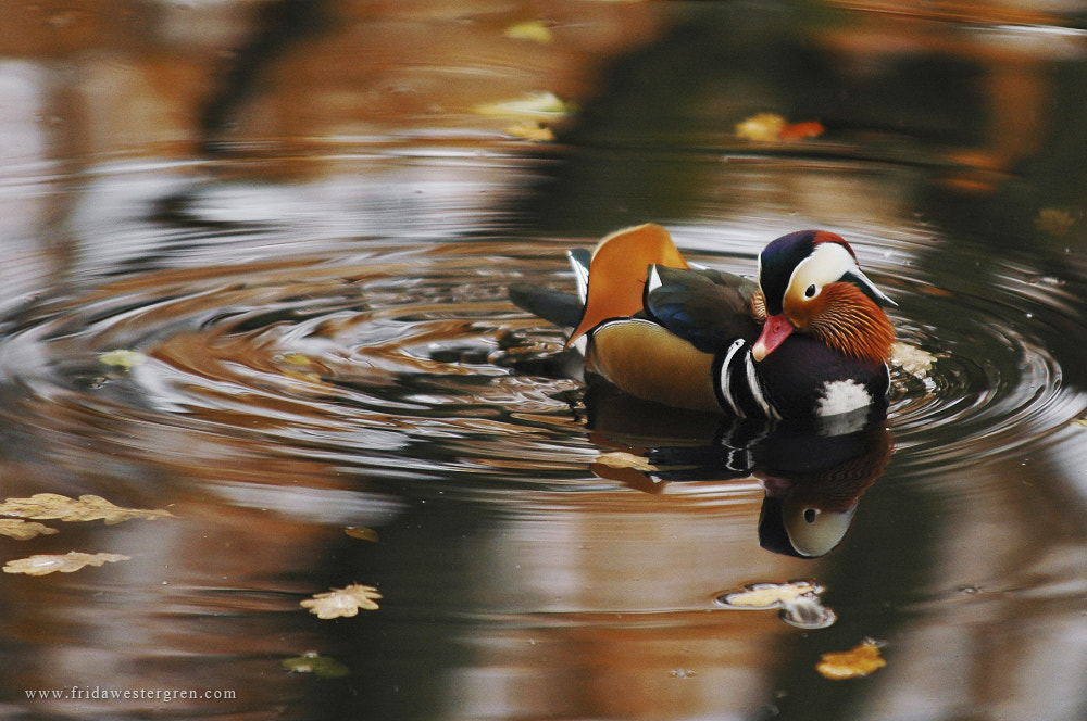 Photograph Floating on the water by Frida Westergren on 500px