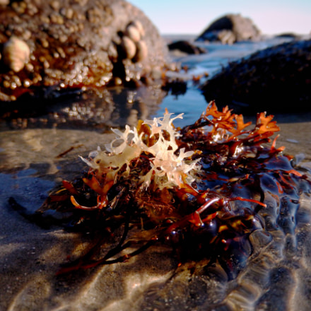 Seaweed in Shallow Water, Nikon COOLPIX S9600