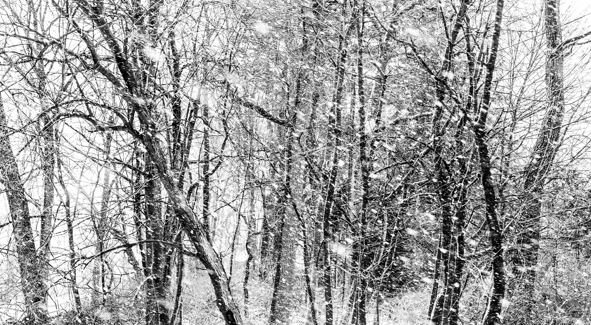 Photograph { WHITEOUT } by Anh Gerrard  on 500px