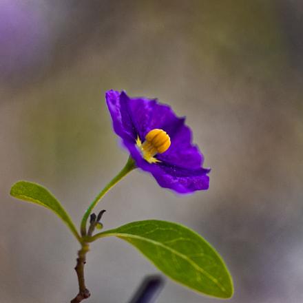Spring Blooming, Nikon D610, AF Micro-Nikkor 60mm f/2.8