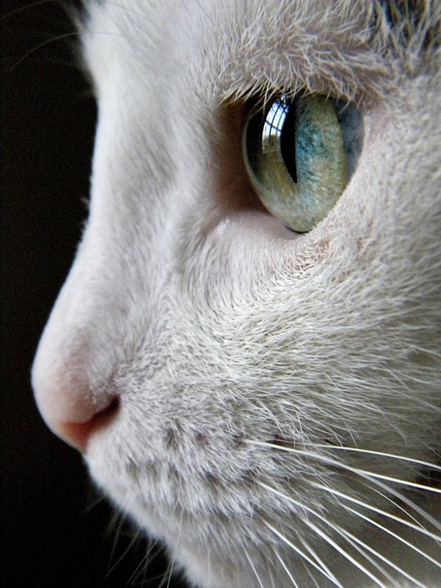 Photograph Cat Eye Reflection by Cherylorraine Smith on 500px