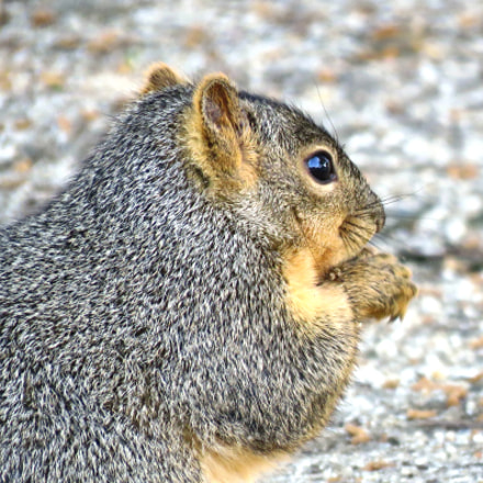 Squirrel Eating In The, Canon POWERSHOT SX60 HS, 3.8 - 247.0 mm