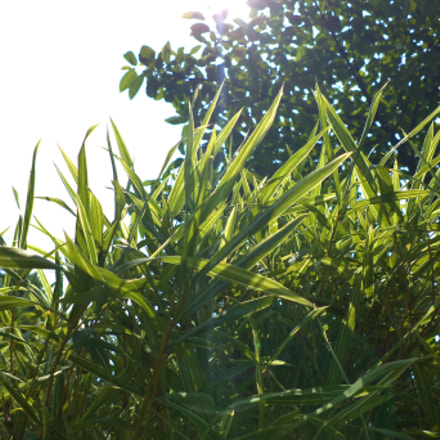 grass with sunflares, Sony DSC-W620