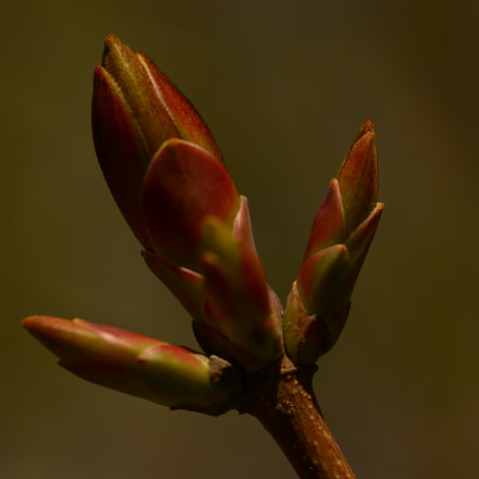 Spring in life, Nikon D800, AF Micro-Nikkor 60mm f/2.8D