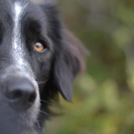 THE dog, Nikon D3100, AF-S Nikkor 50mm f/1.8G